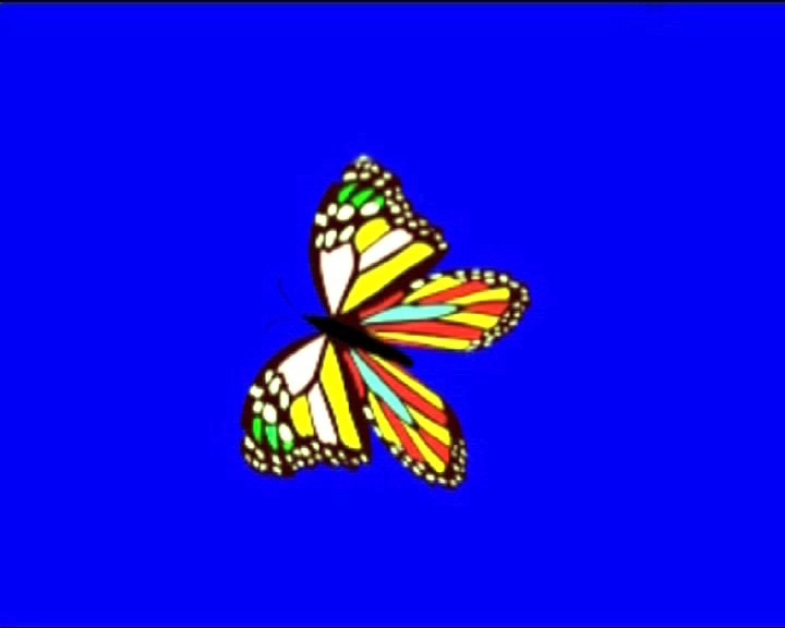 Бабочка на хромакее - 27 Марта.2019 - Фотовидео.